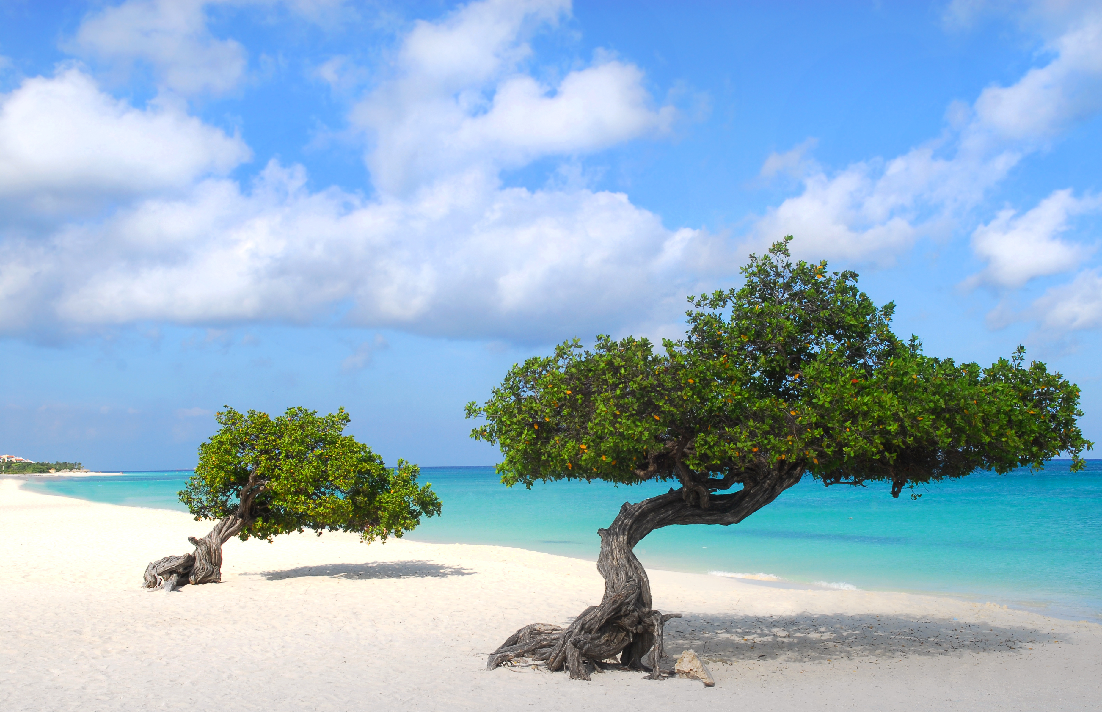 Paradise Found: Aruba