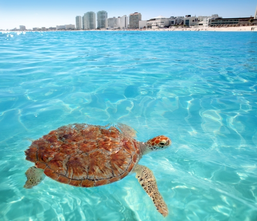 What to Do in Cancun this October!
