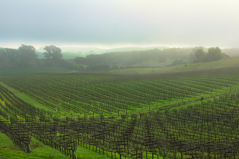 After the Quake, Napa Valley Is Open for Business