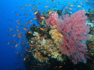 Rarotonga reef South Pacific