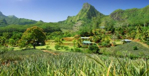 Tahiti pineapple plantations South Pacific