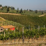 Tuscany vineyards Italy