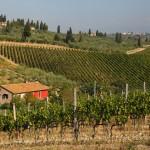 Tuscany vineyards Italy