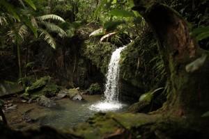 El Yunque Rainforest, Rio Grande