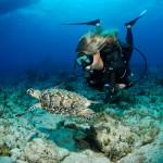 Dive Cayman Islands - Lawson Wood