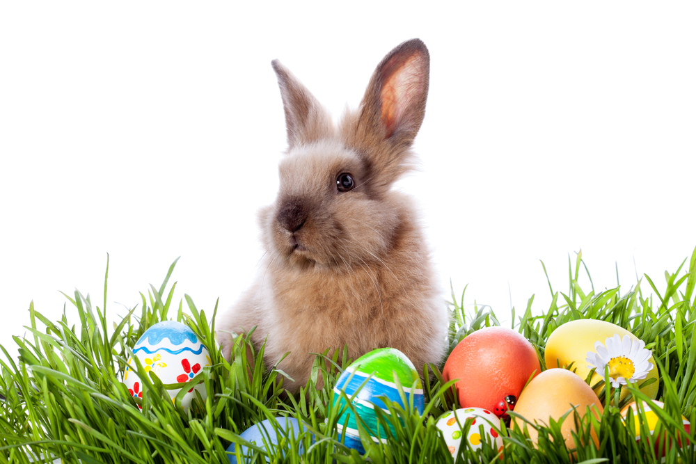Egg-citing Things to Do This Easter