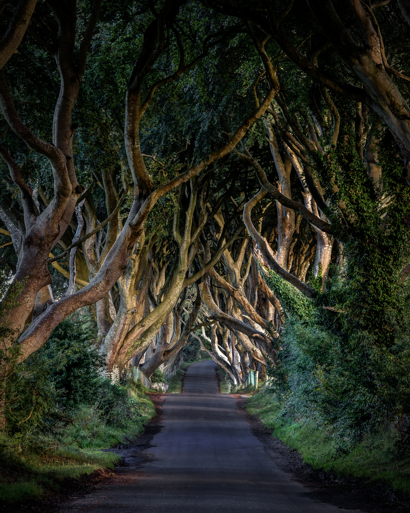 Ireland's Dark Hedges served as the King's Road