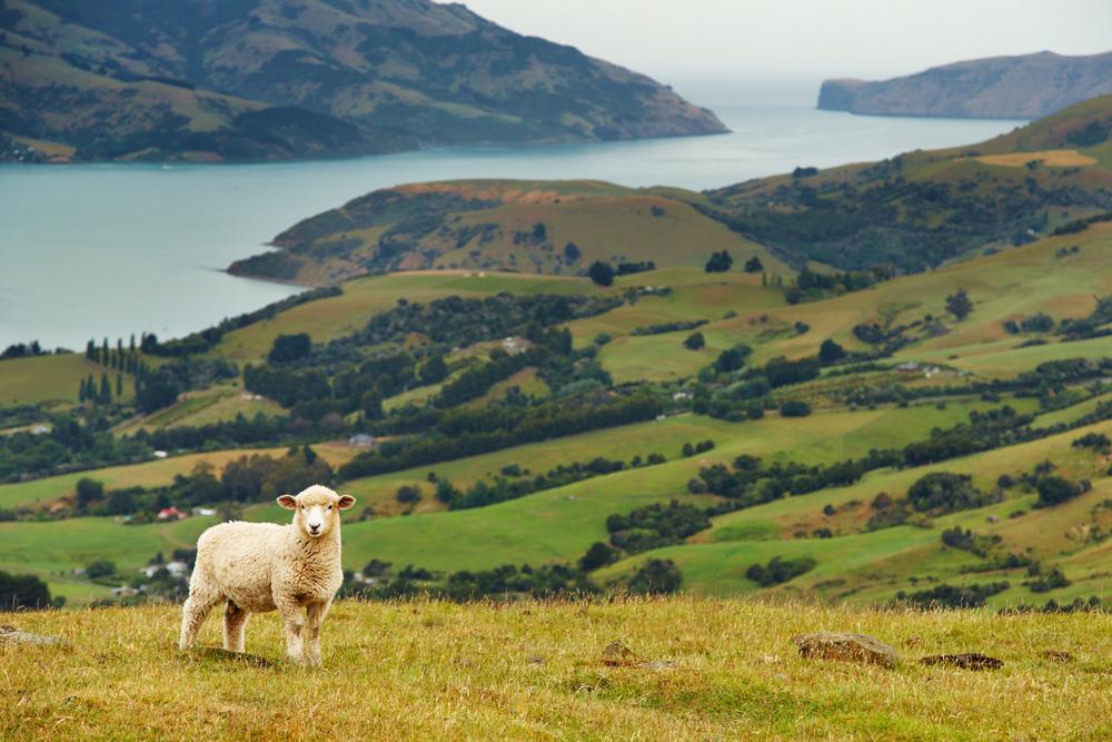 New Zealand's Top Five Must-Do's … And the One Wish-I-Did