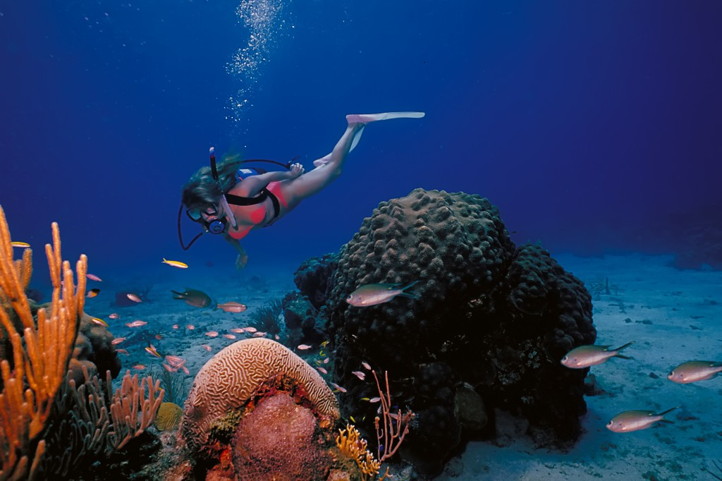 Diving the vibrant waters surrounding St. Croix