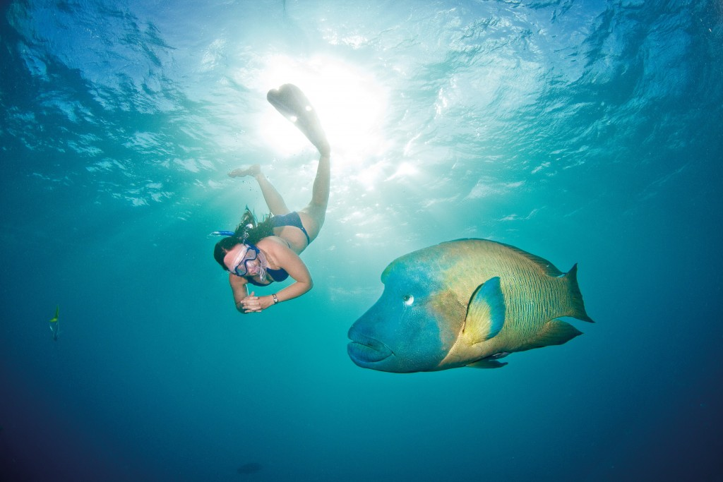Snorkel Cairns Australia