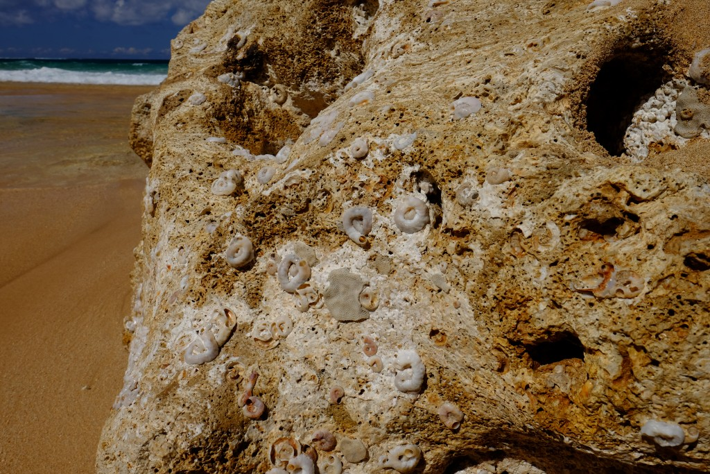 Uncover creature and coral fossils like these on your own expedition on Kauai's South Coast.